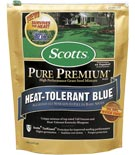 Heat tolerant bluegrass